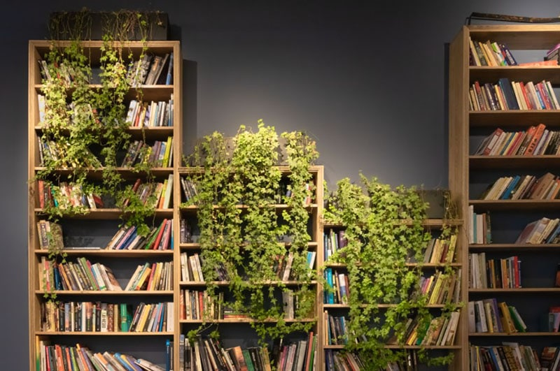 How to organize a bookshelf with a lot of books