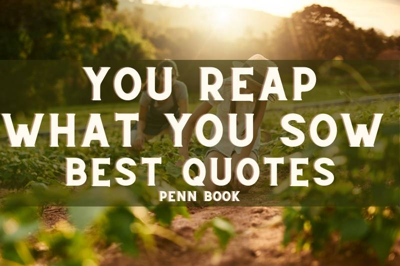 You Reap What You Sow Quotes